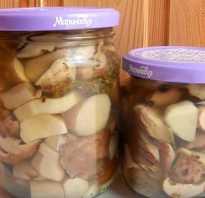 Заготовка грибов на зиму – рецепты маринованных, консервированных и солёных закаток. Особенности консервирования грибов в банках на зиму