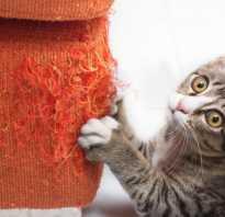 Кошка дерет диван что делать