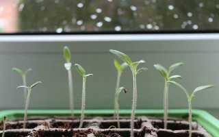 Органическое удобрение для рассады растений