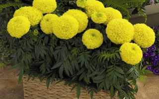 Цветы в ящиках на балконе