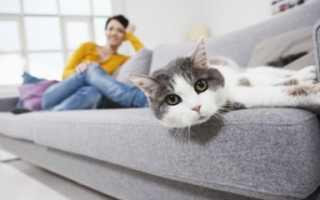 Кошка написала на диван как убрать запах