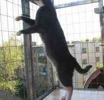 Как сделать клетку для кошки своими руками