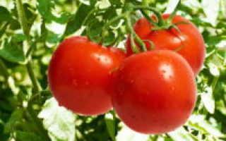 К чему снятся красные помидоры: в салате, на ветках, в неожиданных местах? Основные толкования, к чему снятся красные помидоры. Во сне видела помидоры. К чему снятся помидоры красные женщине