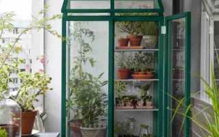 Организуем парник для балкона: теплица, не выходя из дома