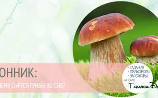 Сонник грибы, к чему снятся грибы во сне. Сонник: к чему снятся грибы во сне