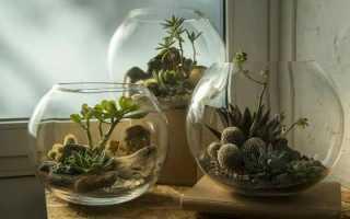 Как создать флорариум своими руками