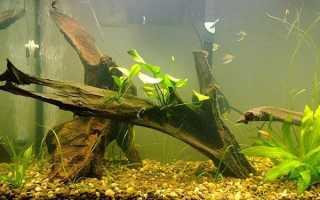 Как сделать корягу для аквариума своими руками в пять шагов
