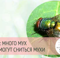К чему снятся мухи? Сонник. Толкование сна. Большая муха