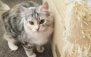 Лучших 5 советов: как отучить кошку драть мебель и обои