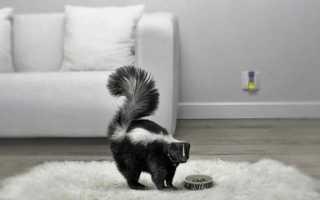 Как избавиться от запаха сырости в диване