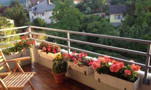 Цветы на балконе: выбор и расположение, дизайн, фото и названия