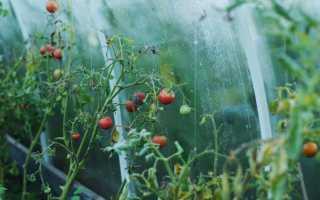 Как сделать теплицу удобной для работы, секреты и лайфхаки от огородников